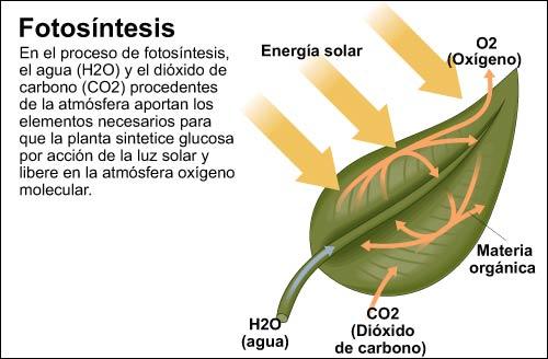 Desde las gavetas de mi escritorio procesos vitales para for Que significa plantas ornamentales