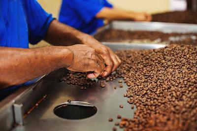 7 BLOG KOPI YANG HARUS KAMU BACA, kopi terbaik, kopi indonesia