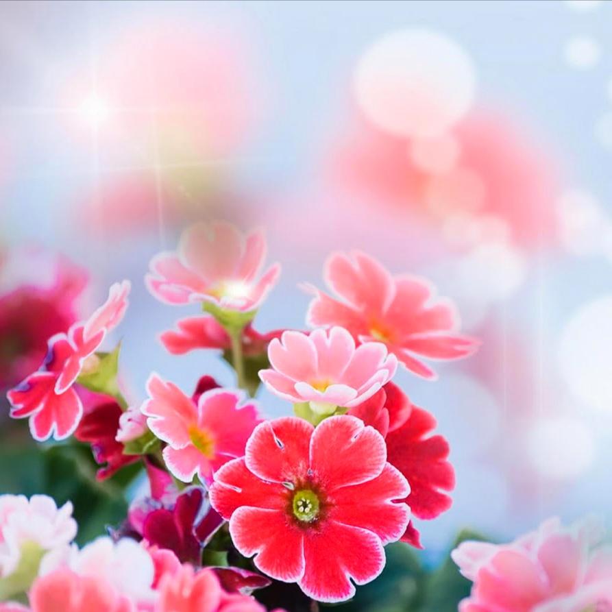 Gambar Bunga Indah Dan Cantik
