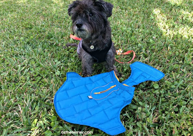 kurgo loft dog jacket goes on easily to keep dog's core warm and dry