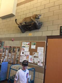 harrytimes jack cougar