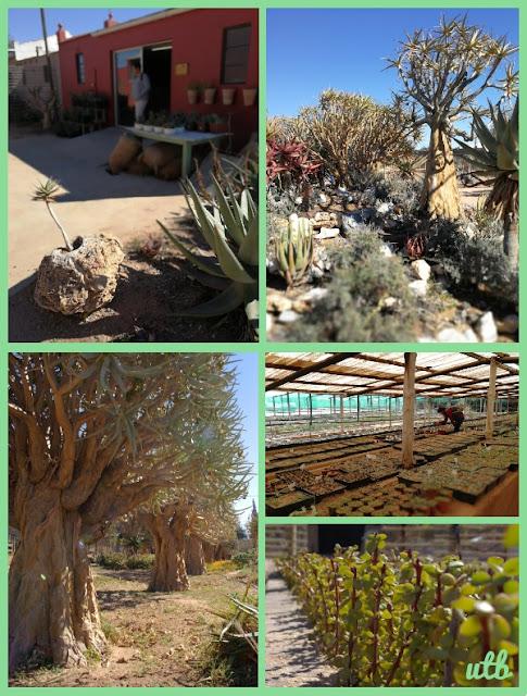 succulent-nursery