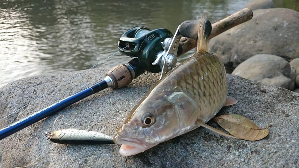 Cara Mancing Casting Di Sungai Resep Umpan Ikan Paling Jitu