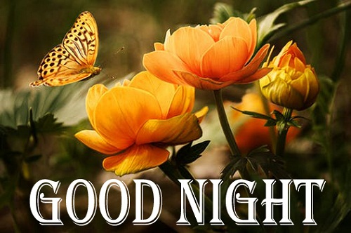 Good Night Images of Flowers