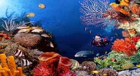Taman laut bunaken : tempat wisata di manado yang mengasyikan