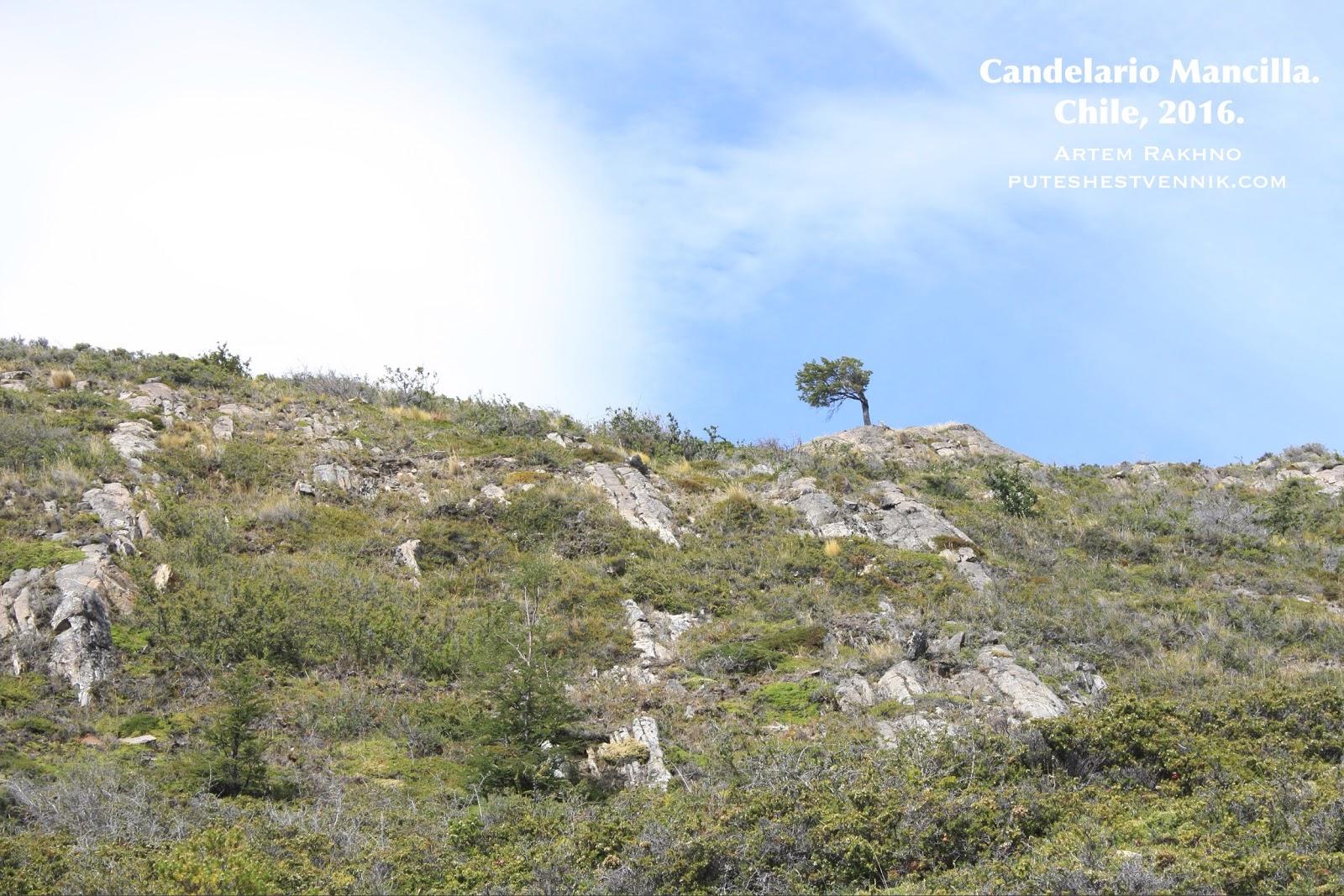 Одинокое дерево на горе