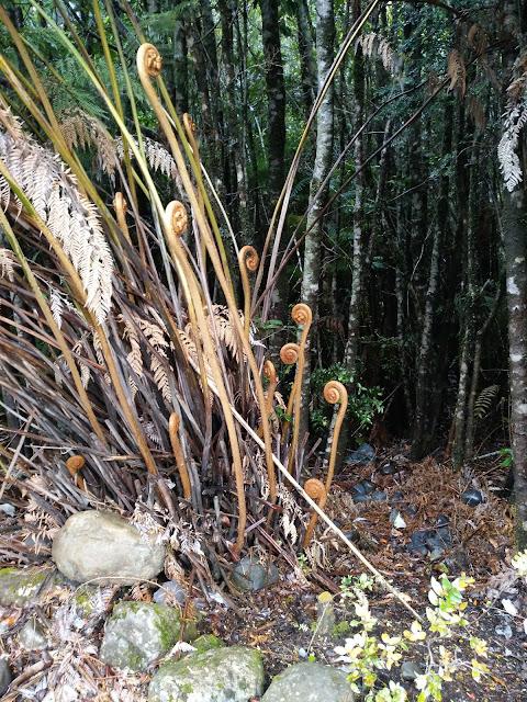 Helechos en Parque Pumalín, Chile
