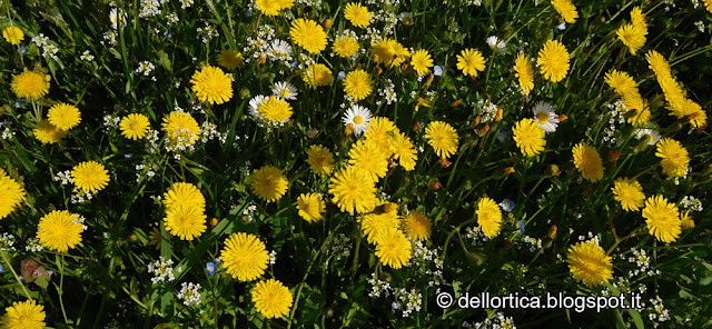 prato fiorito della fattoria didattica dell ortica Savigno Valsamoggia Bologna Zocca