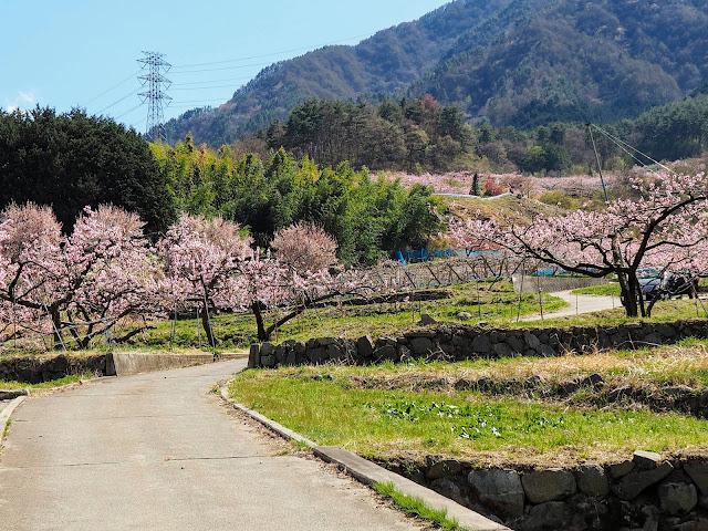 黒駒 桃畑