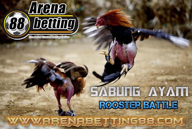Panduan Dan Cara Bermain Taruhan Sabung Ayam Di Arenabetting88.com