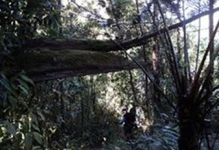 Jalur pendakian gunung Cikuray melalui Cikajang