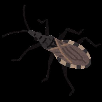 サシガメのイラスト(虫)