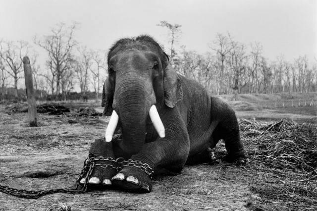 Manusialah makhluk terkuat di muka bumi ini tapi juga makhluk tersombong Sadis! 12 Foto Kekejaman Pada Hewan Yang Akan Membuatmu Bergidik Ngeri!