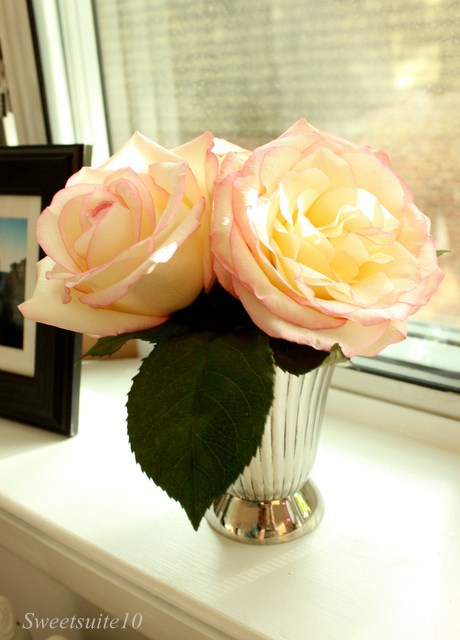 White roses with a pink edge