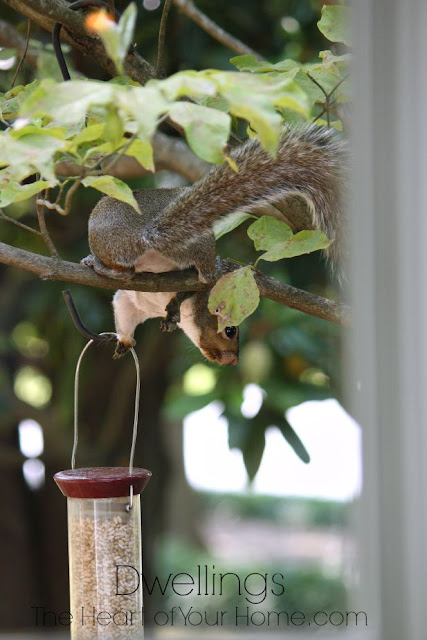 Thieving squirrel!