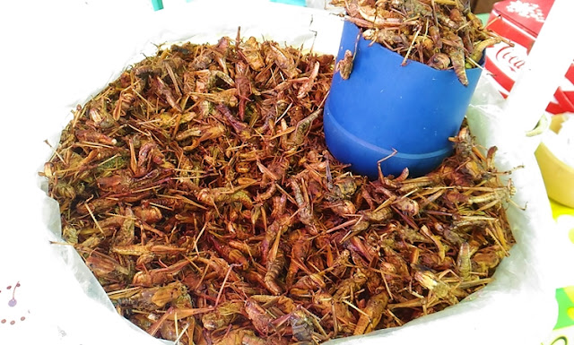 Deep-fried grasshopper/ locusts