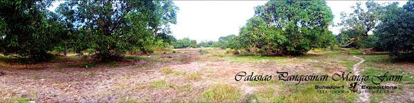 Mango Farm Calasiao - Schadow1 Expeditions
