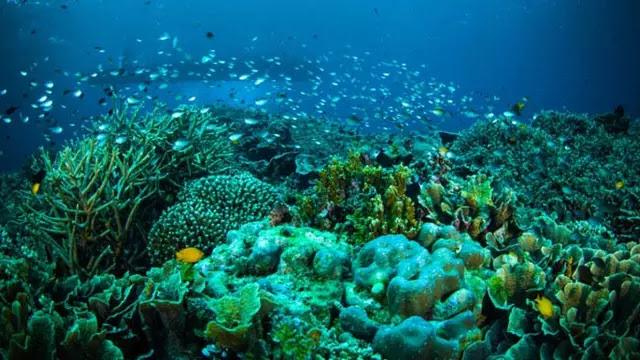 Keindahan Taman Laut Nasional Bunaken