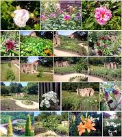 Léto 2017 v Morušové zahradě