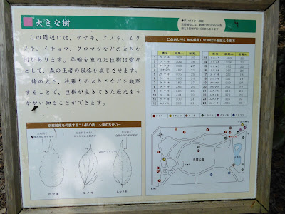 京都御苑には、幹周りが300cmを超える巨樹が約160本