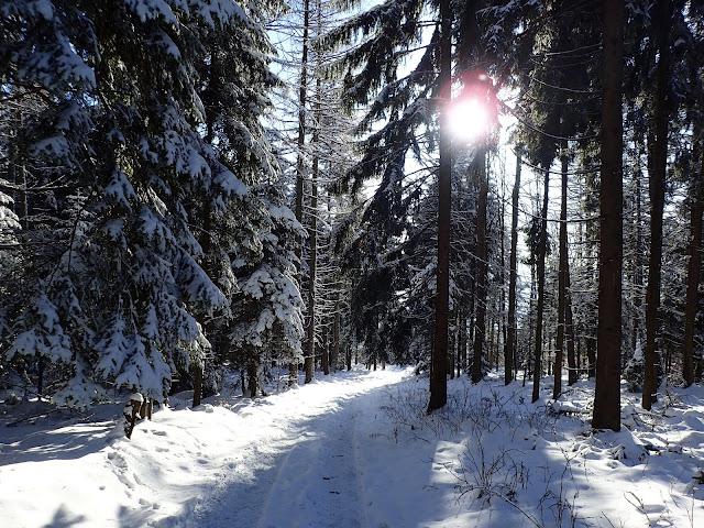 Przez las na Lubomirze przebija słońce