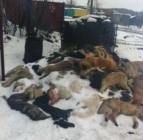 В России массово истребляют жывотных