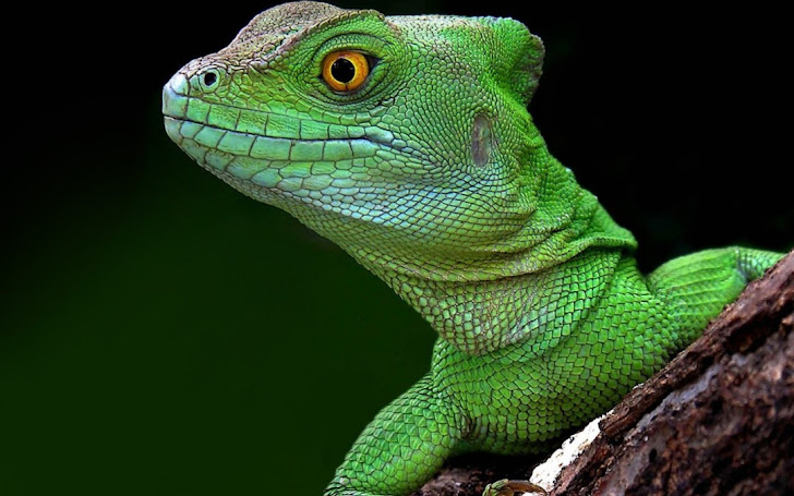 Six U.K. Teens Arrested for using Lizard Squad's DDoS Tool