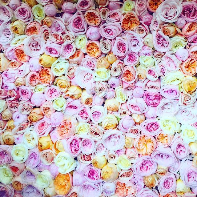 Living rose wall chelsea flower show