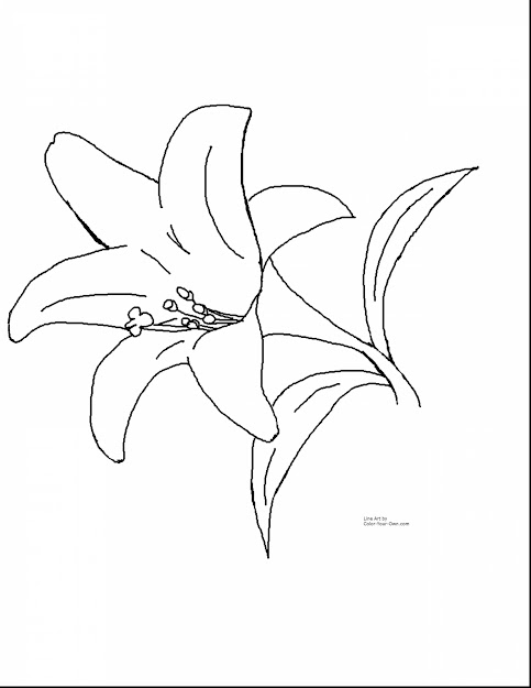 Impressive Lily Coloring Pages Printable With Printable Flower Coloring  Pages And Printable Flower Garden Coloring Pages