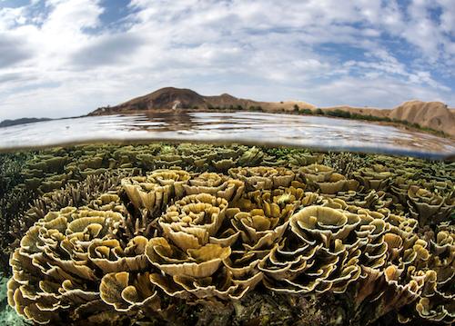 Les pigments de la photosynthèse rendent possible la calcification des coraux constructeurs de récifs. Autrement dit, des molécules minuscules sont à l'origine de la seule structure animale visible de l'espace ! Photo : ead72 - Fotolia.com