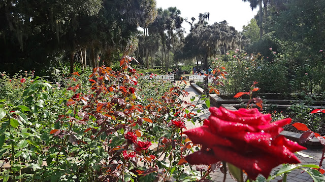 Washington Oaks Rose Garden , Palm Coast