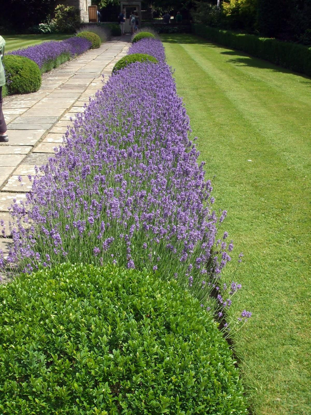Rosemary S Sampler English Lavender