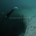 Esse mergulhador pula para o abismo; vídeo