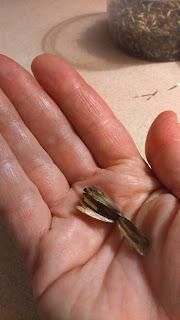 Łuska po nasionach aksamitki