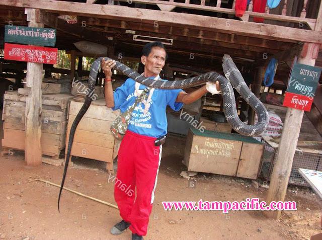 Làng rắn hổ mang Ban Koke Sa-nga tỉnh Khon Kaen đối mặt sinh tồn