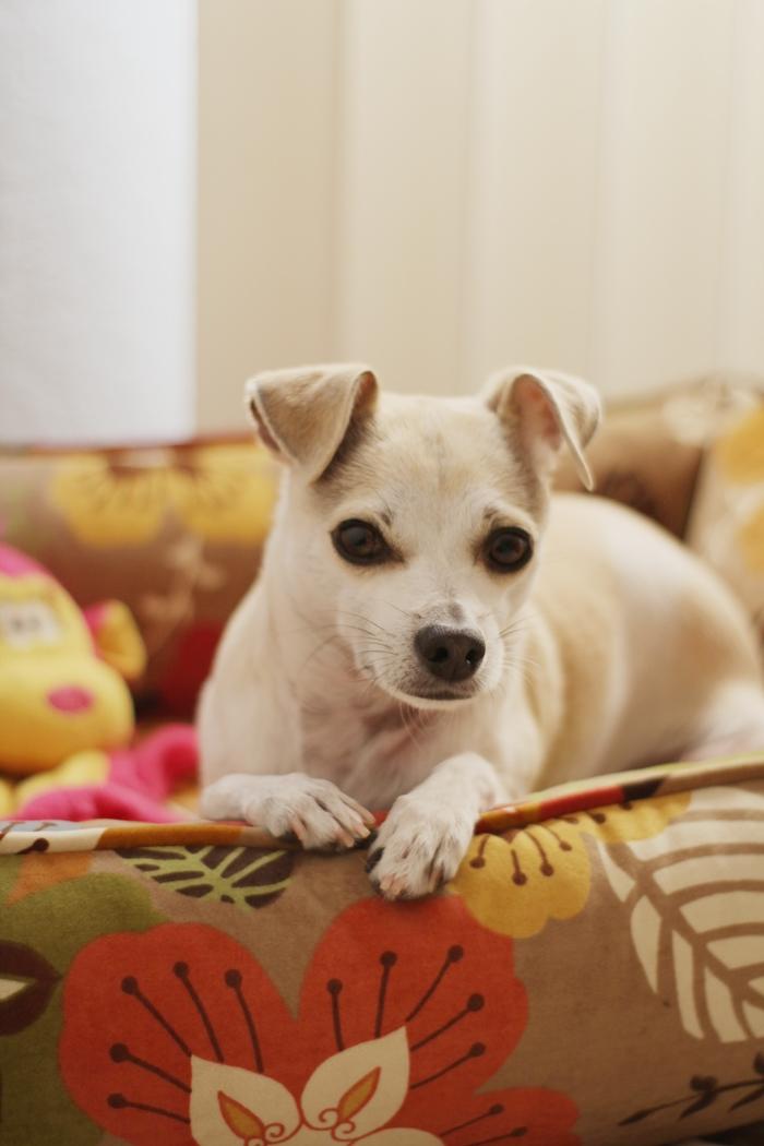 Plush Dog Beds Large