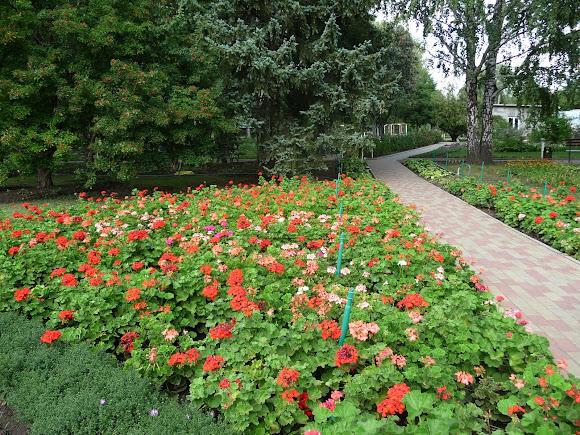 Донецк. Ботанический сад. Коллекция цветов