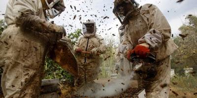 ΤΑ ΚΟΝΟΜΑΕΙ ΧΟΝΤΡΑ ο Παλαιστίνιος: ΓΙΑΤΡΕΥΕΙ ανίατες ασθένειες με κεντρί από μέλισσες!