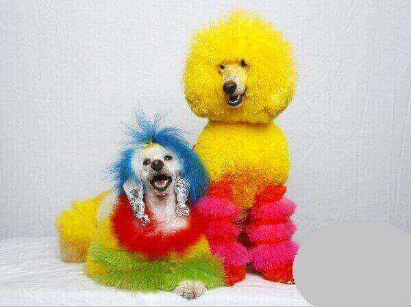are dogs colorblind science fair project uk  cats color blind what animals are color blind how do we know dogs are color blind dog vision dogs with brown eyes dogs color blind myth are dogs colorblind science project  yes or no to red uk completely color blind