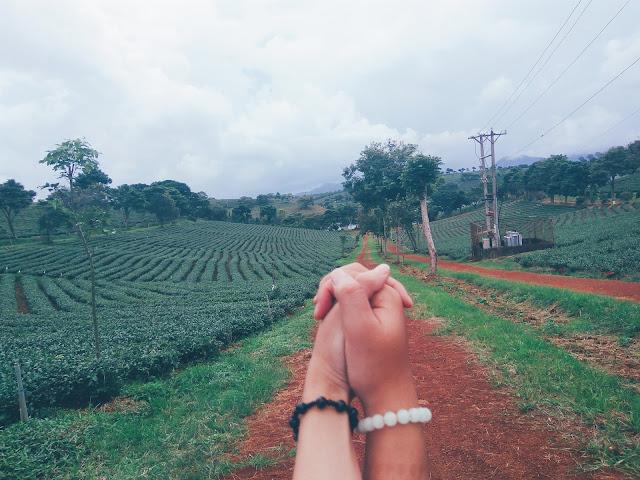 Những hình ảnh lãng mạn tại đồi chè Bảo Lộc