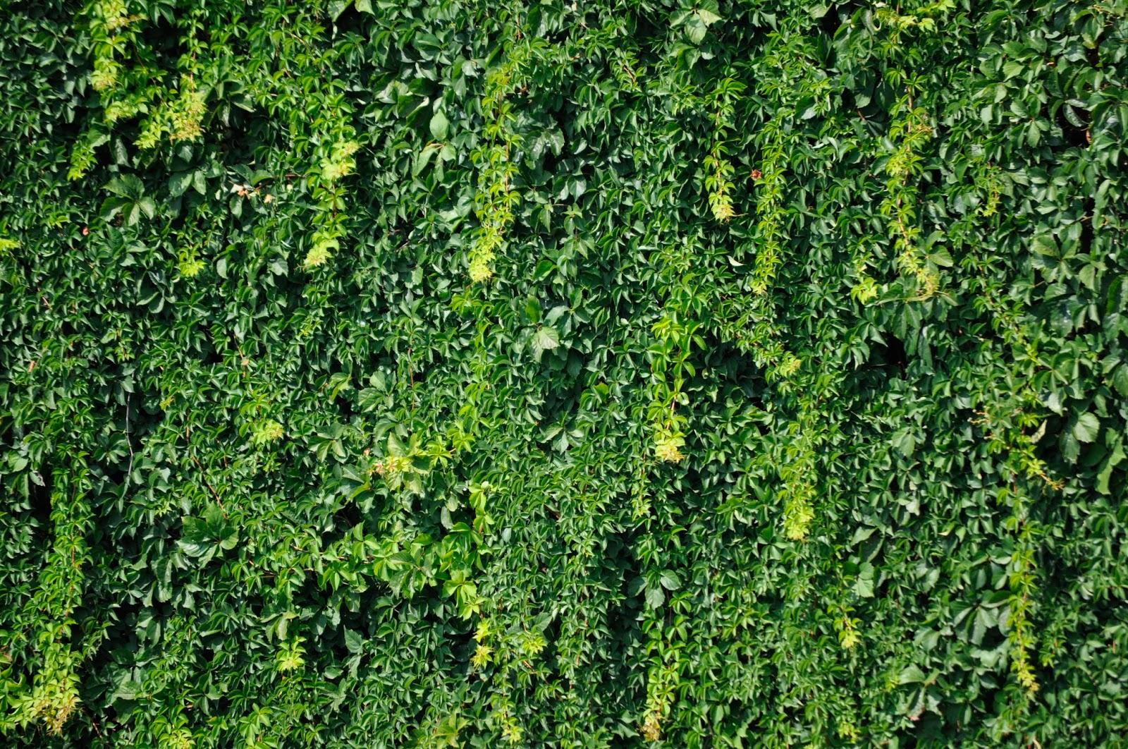 Diz-i Photos: Texture verdure