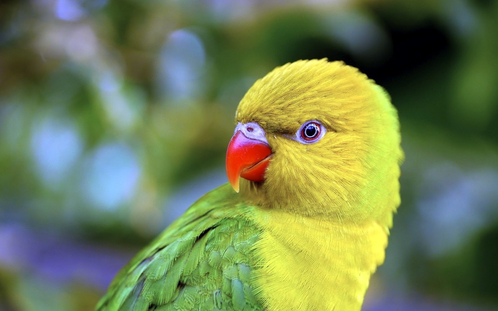 Top 47 Most Dashing And Beautiful Parrot Wallpapers In HD