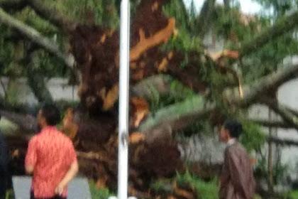 Hujan Angin Disertai Petir Sebabkan Pohon Beringin Di Depan Kantor LPMP Jabar Tumbang | JabarPost Media