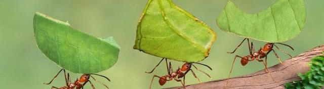 غرائب وعجائب النمل