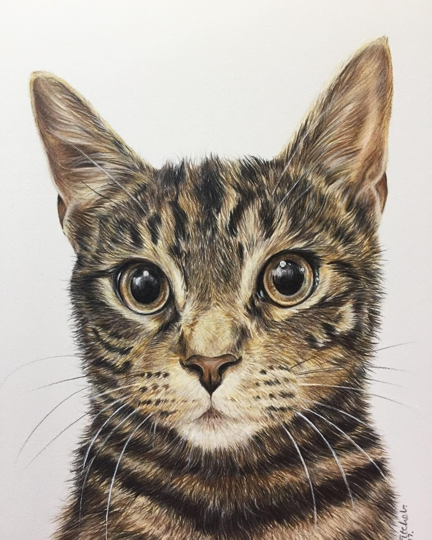02-Tabby-cat-Zoe-Fitchet-Pet-Portraits-Cats-and-Dogs-Drawings-www-designstack-co