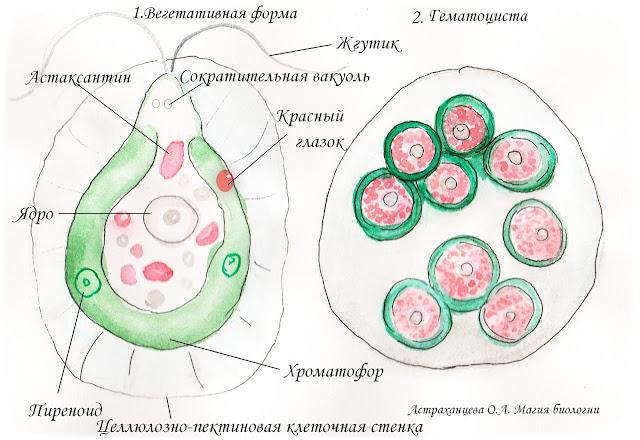 gematokkus-tajna-krovavyh-luzh-i-antarktida