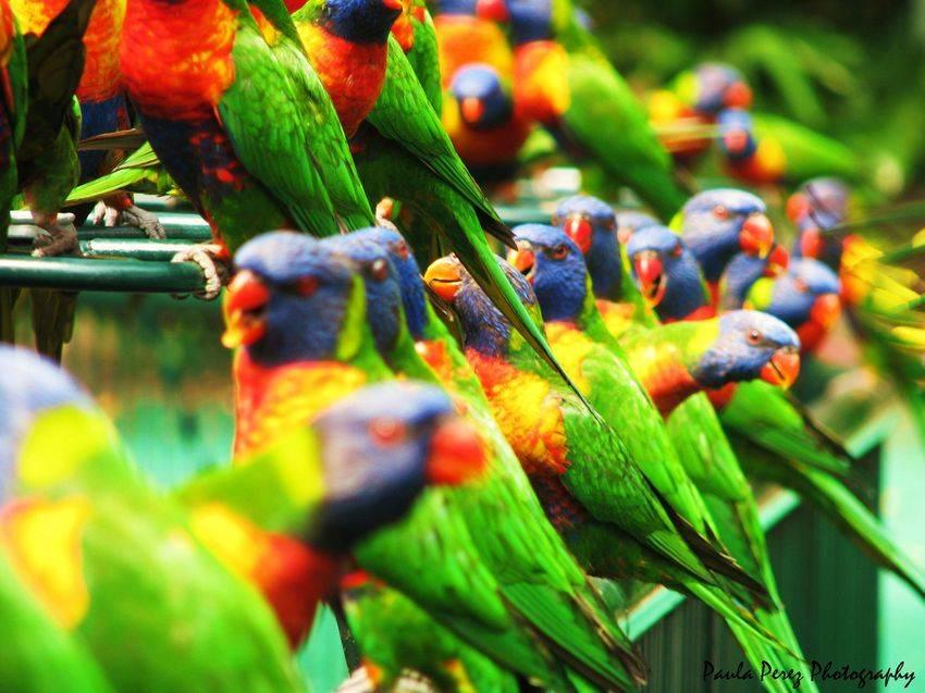 Amazing World & Fun: Beautiful Colorful Birds - Nature - photo#16