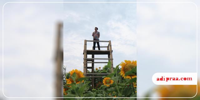 Berdiri di atas gardu pandang Resoinangun Garden | adipraa,com