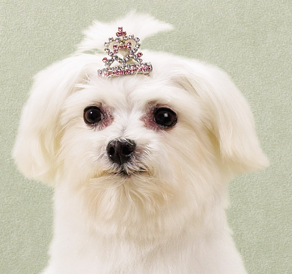 Cute Hollywood Actress Hd Wallpapers Lindos Perritos Cachorritos Hermosos Cute Puppies Hot