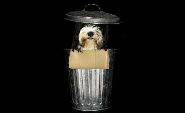trash dog by danilo biancalana